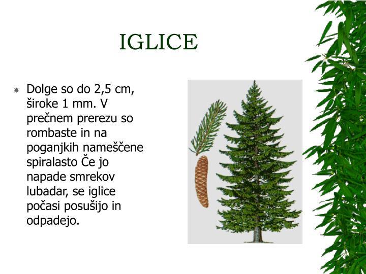 IGLICE