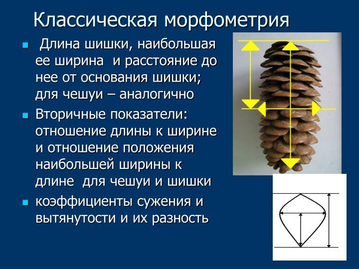 Классическая морфометрия