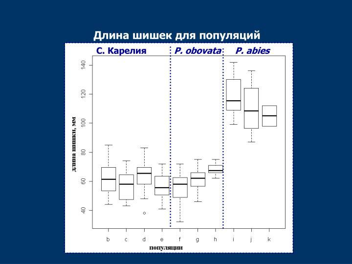 Длина шишек для популяций
