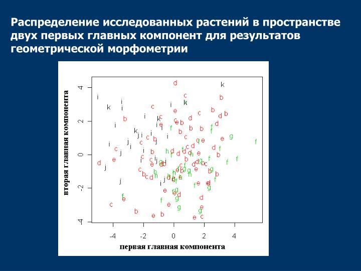 Распределение исследованных растений в пространстве двух первых главных компонент для результатов геометрической морфометрии
