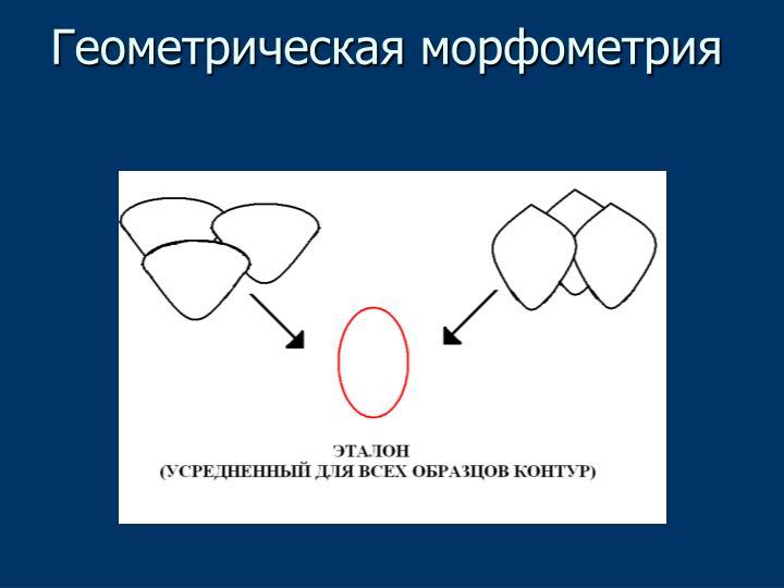 Геометрическая морфометрия
