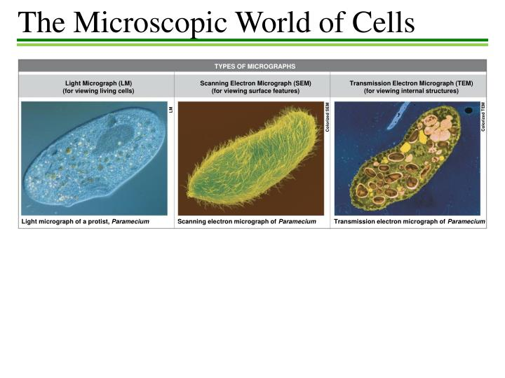 The Microscopic World of Cells