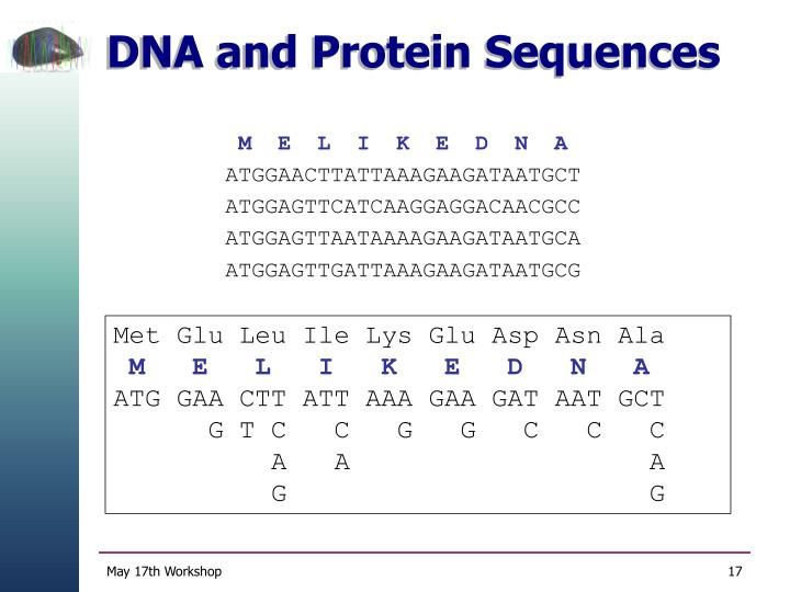 DNA and Protein Sequences