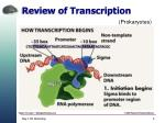 review of transcription1