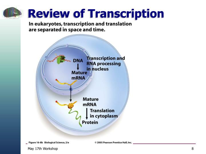 Review of Transcription