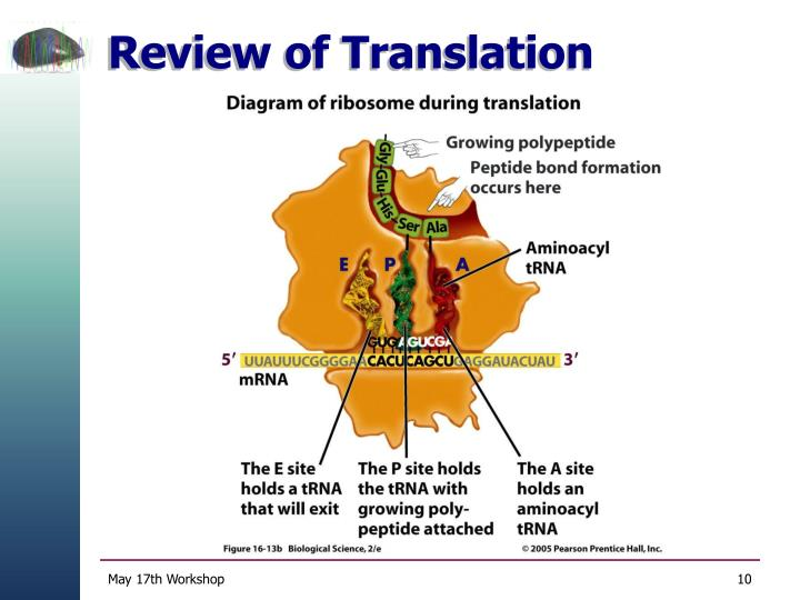 Review of Translation
