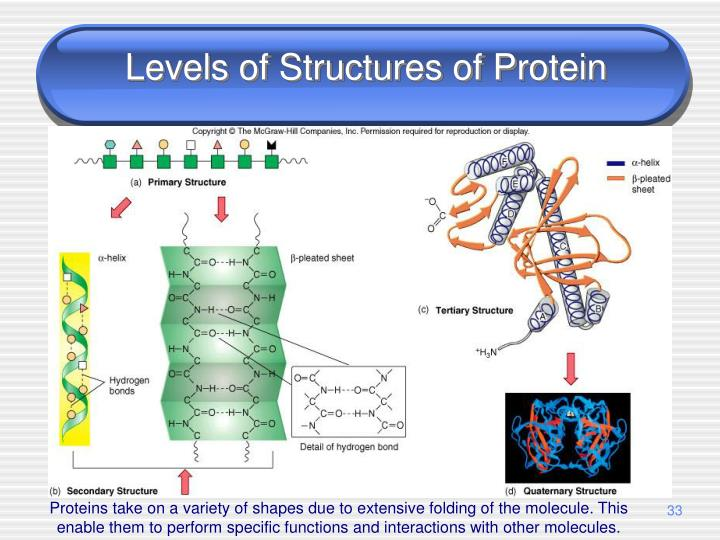 Levels of Structures of Protein
