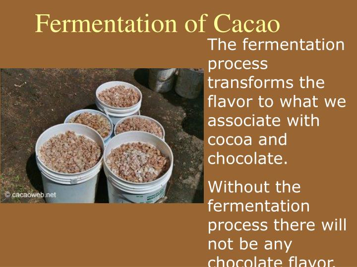 Fermentation of Cacao
