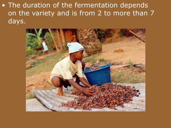 The duration of the fermentation depends on the variety and is from 2 to more than 7 days.