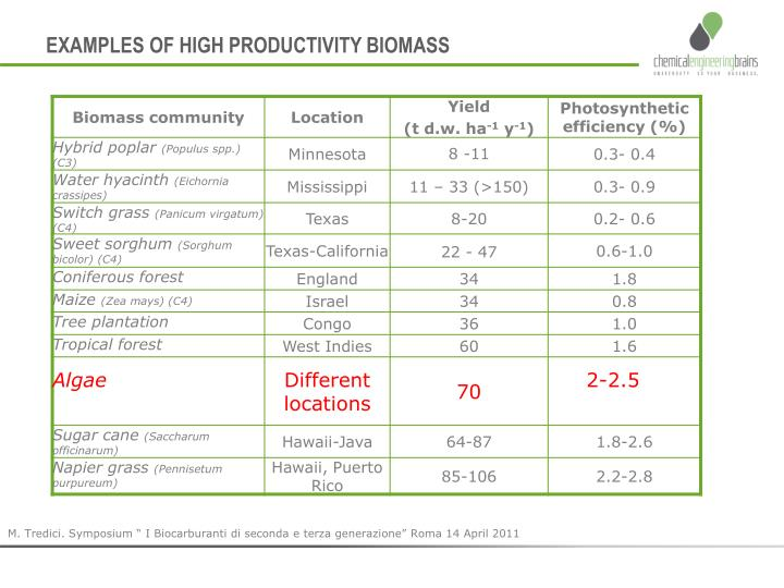 EXAMPLES OF HIGH PRODUCTIVITY BIOMASS