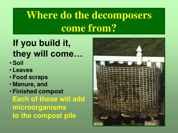 Where do the decomposers come from?