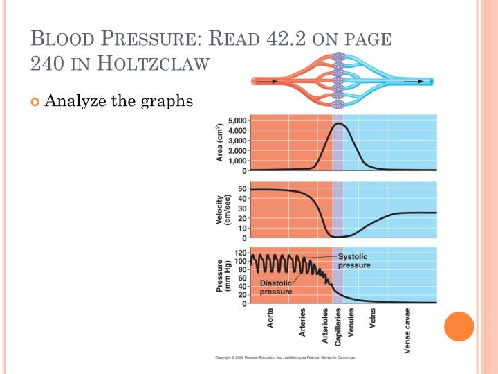 Blood Pressure: Read 42.2 on page 240 in Holtzclaw
