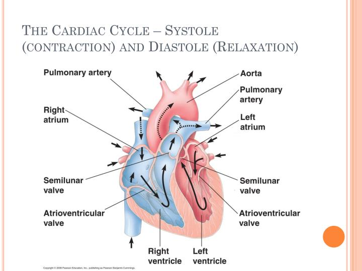 The Cardiac Cycle – Systole (contraction) and Diastole (Relaxation)