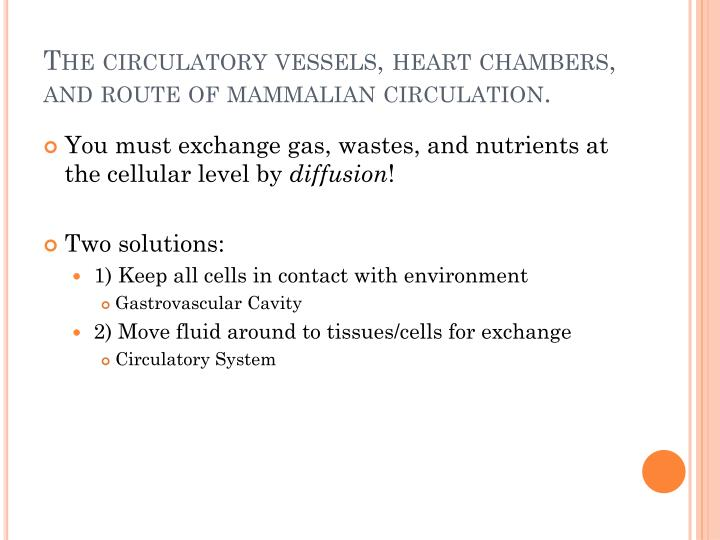 The circulatory vessels, heart chambers, and route of mammalian circulation.