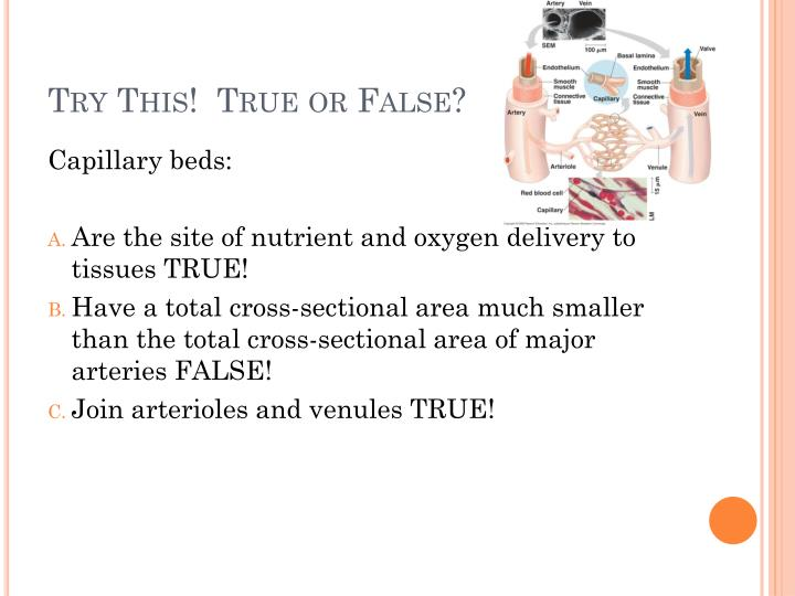Try This!  True or False?