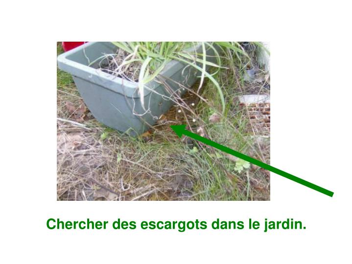 Chercher des escargots dans le jardin.