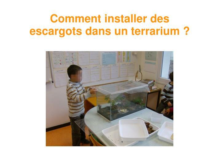 Comment installer des escargots dans un terrarium ?