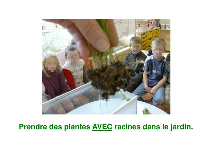 Prendre des plantes