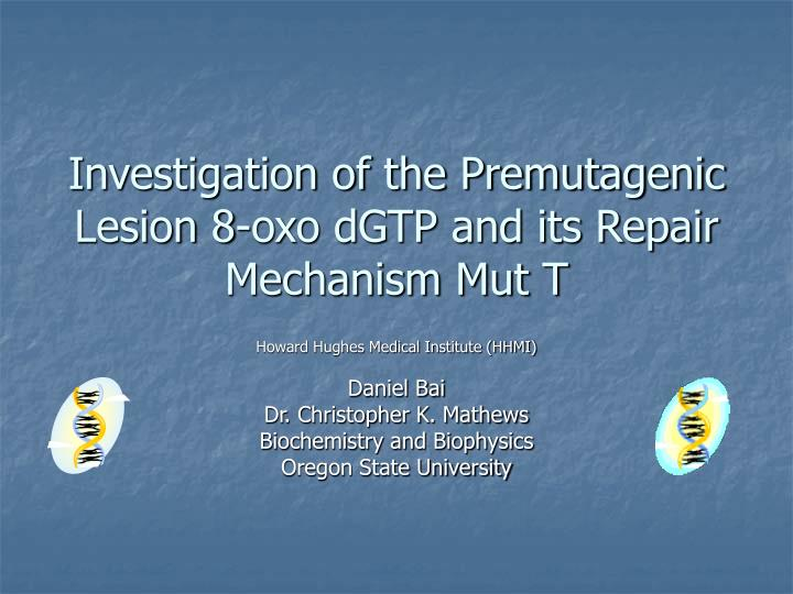 investigation of the premutagenic lesion 8 oxo dgtp and its repair mechanism mut t