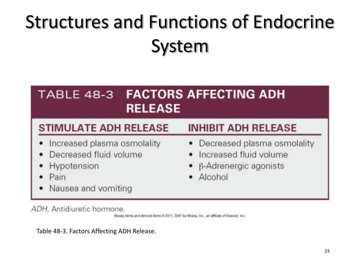 Endocrine System Function And Structure