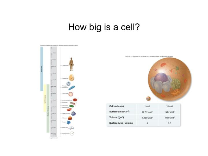 methods for studying cells in the The biology project  cell biology  studying cells  introduction studying cells tutorial introduction contents the  lives of cells  scientific method.