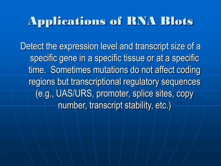 Applications of RNA Blots