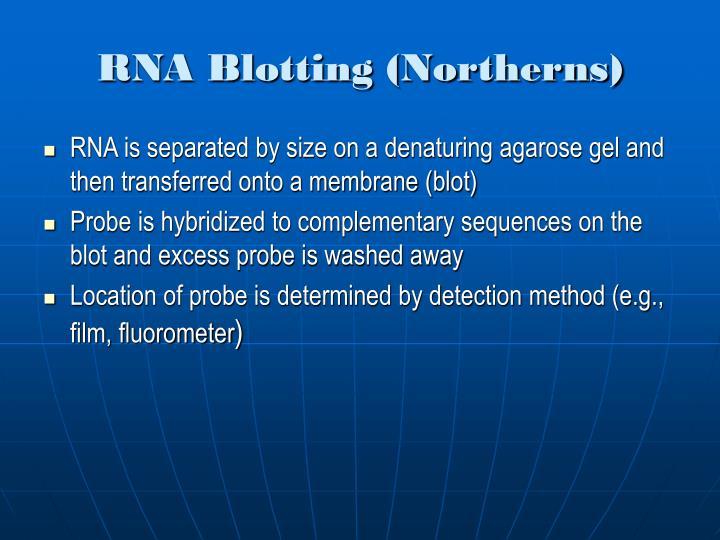 RNA Blotting (Northerns)