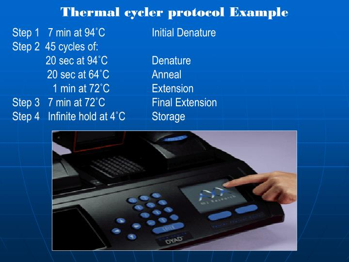 Thermal cycler protocol Example