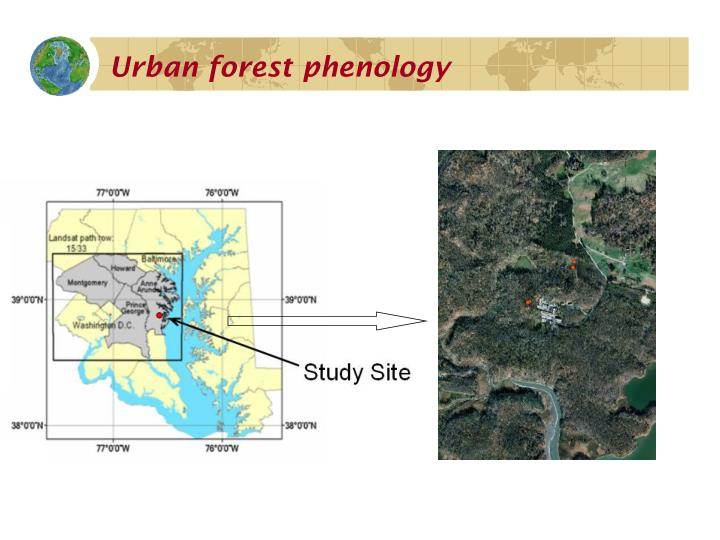 Urban forest phenology