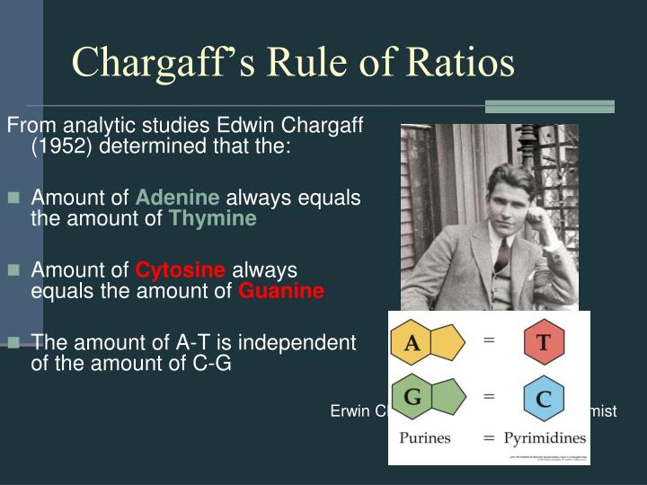 Chargaff's Rule of Ratios
