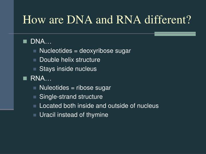How are DNA and RNA different?