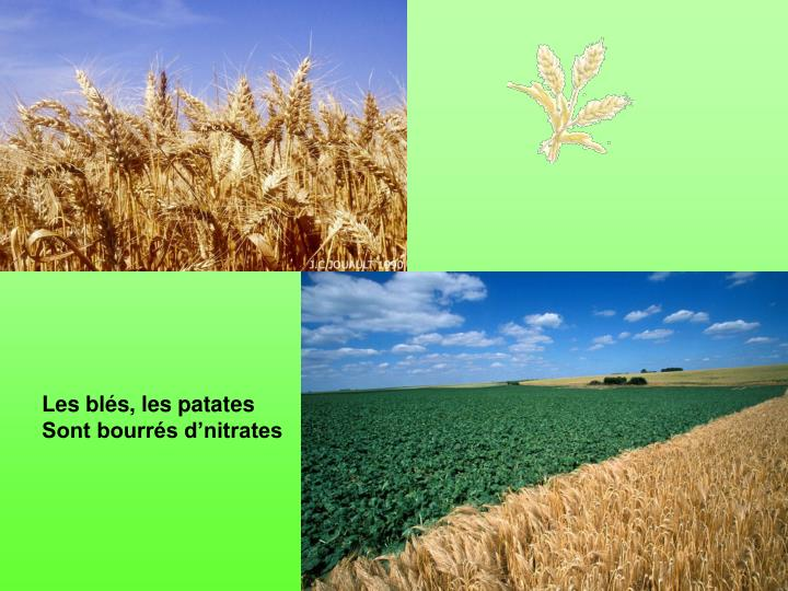 Les blés, les patates