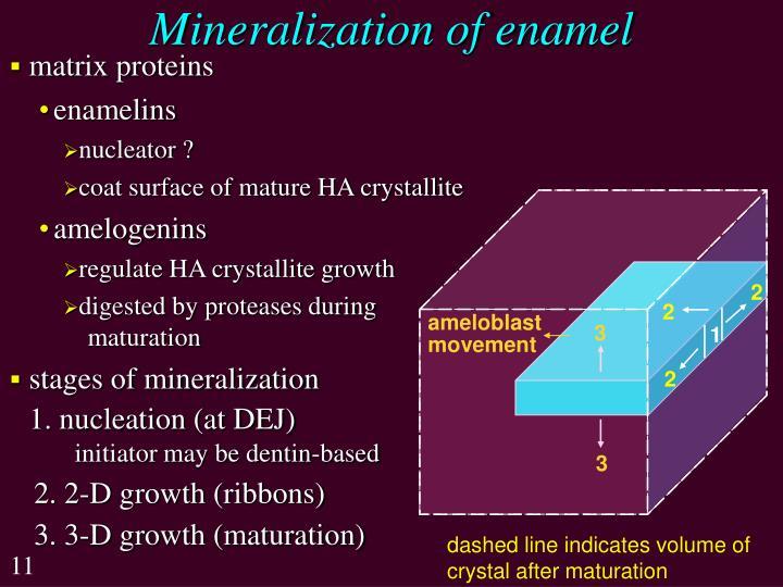 Mineralization of enamel