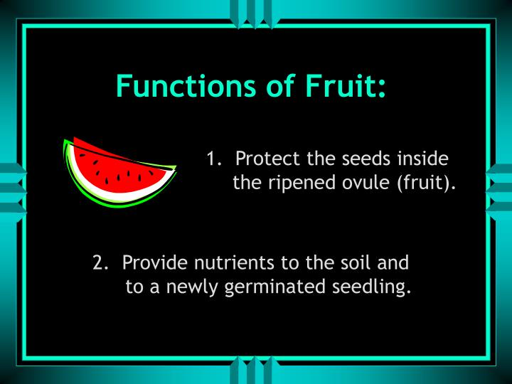 Functions of Fruit: