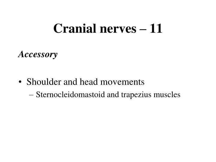 Cranial nerves – 11
