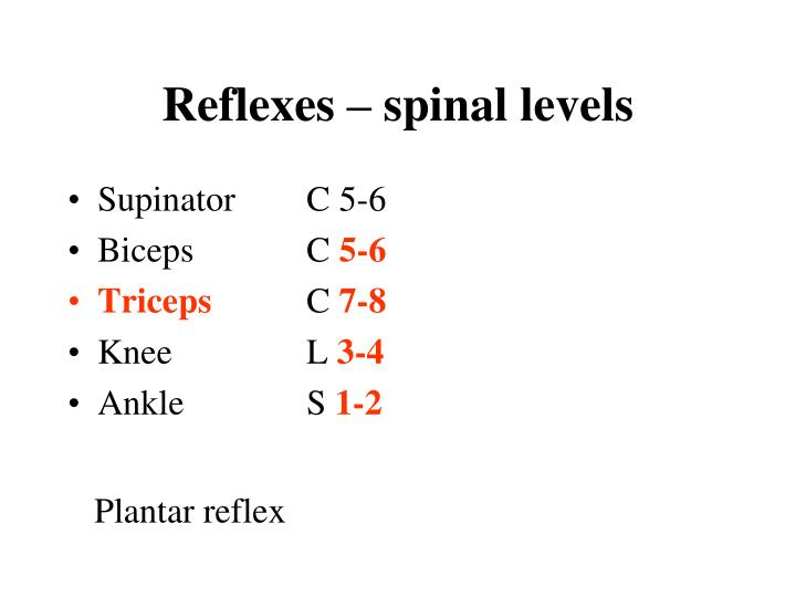 Reflexes – spinal levels
