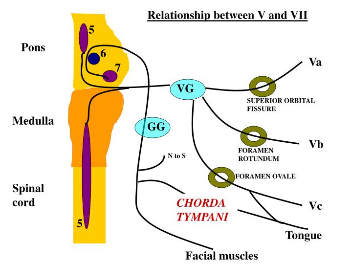 Relationship between V and VII