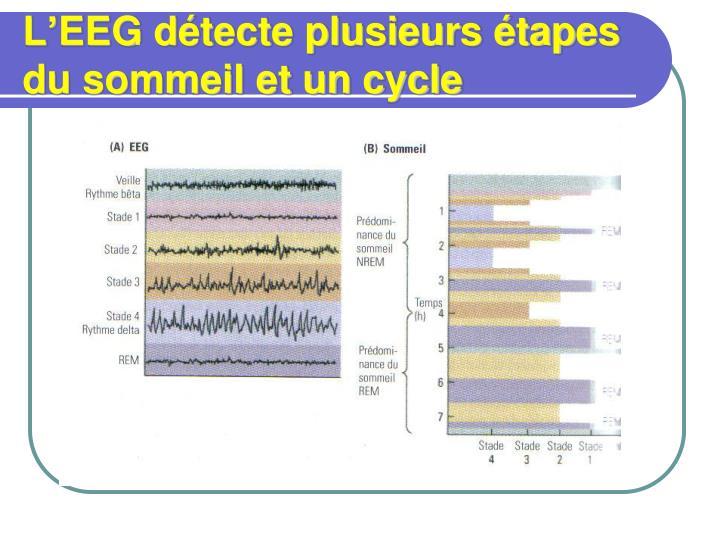 L'EEG détecte plusieurs étapes du sommeil et un cycle