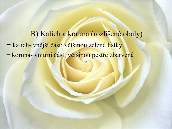 B) Kalich a koruna (rozlišené obaly)