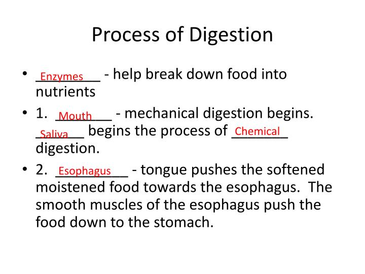 Process of Digestion