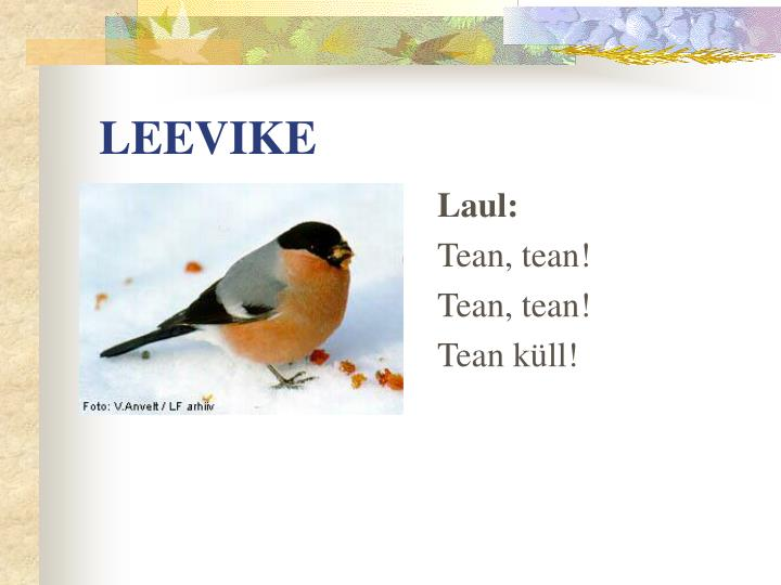LEEVIKE