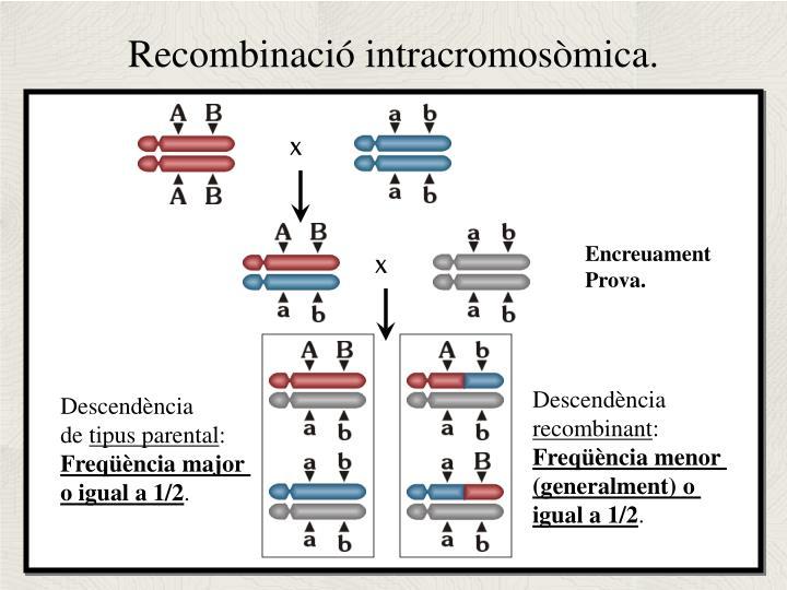 Recombinació intracromosòmica.