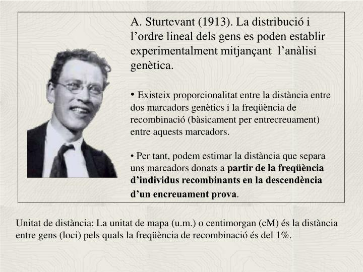 A. Sturtevant (1913). La distribució i l'ordre lineal dels gens es poden establir experimentalment mitjançant  l'anàlisi genètica.