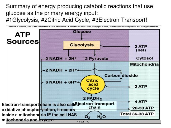 Summary of energy producing catabolic reactions that use glucose as the primary energy input:
