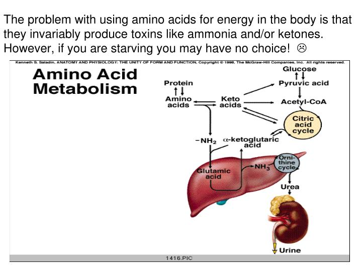The problem with using amino acids for energy in the body is that they invariably produce toxins like ammonia and/or ketones.