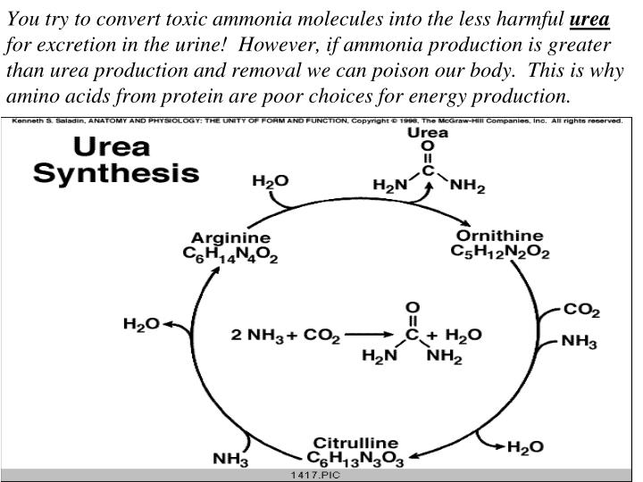 You try to convert toxic ammonia molecules into the less harmful