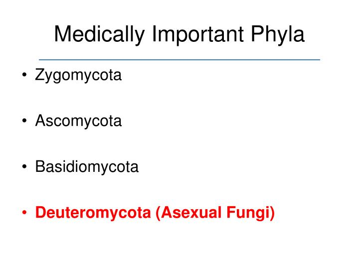 Medically Important Phyla