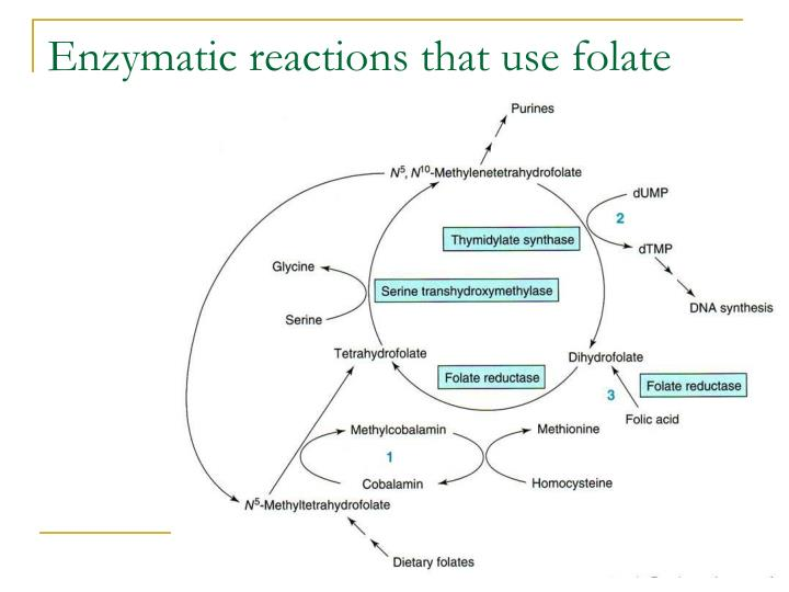 Enzymatic reactions that use folate