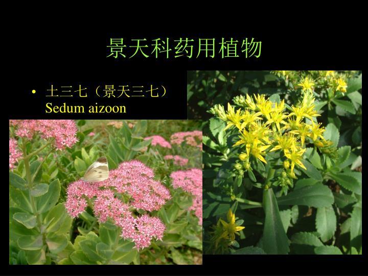 景天科药用植物