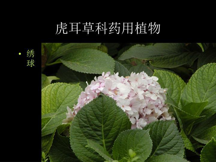 虎耳草科药用植物